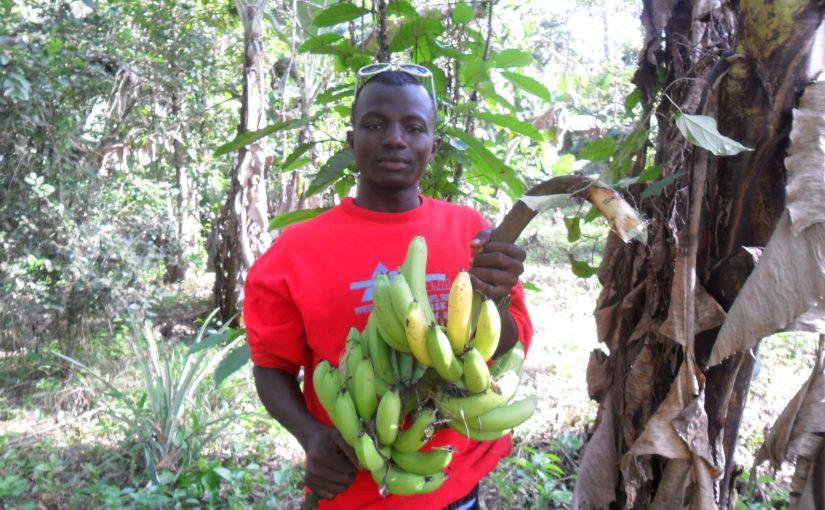 Guinée : Un projet agricole avec la CODAPA